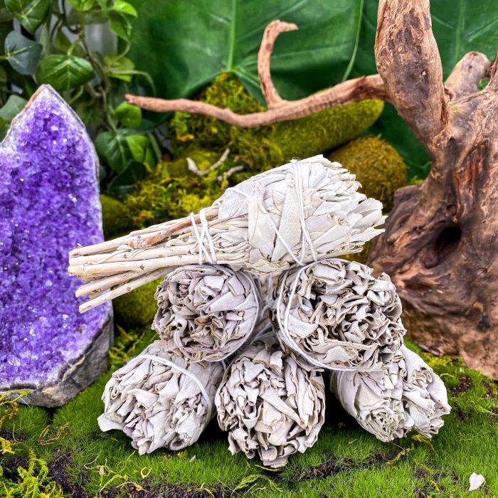 Mini White Sage Bundle