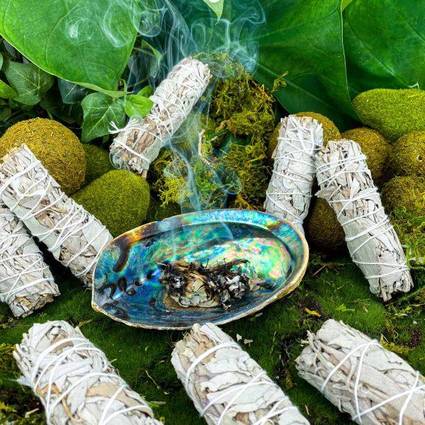 small white sage w abalone shell